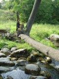 drzewo się nad strumień Zdjęcie Stock
