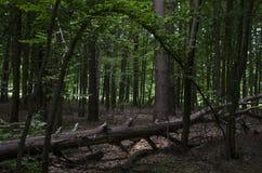 drzewo się Obraz Stock