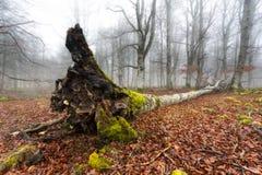 drzewo się Obrazy Stock
