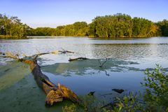 Drzewo spadać w wodę Obrazy Stock