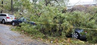 Drzewo spadać na samochodzie Obraz Stock