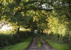 Drzewo Spokojnej sceny samotności Wiejski Drogowy pojęcie Obrazy Royalty Free
