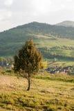 Drzewo & x28; Spruce& x29; na tle góry Drzewo na tle górska wioska samotne drzewo Fotografia Stock
