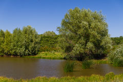 Drzewo stawem Zdjęcie Royalty Free