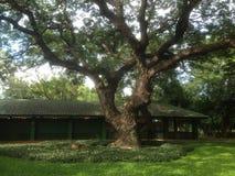 Drzewo sto Obraz Stock