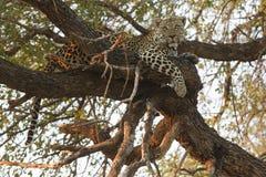 Drzewo stojak Obraz Royalty Free