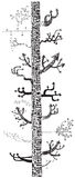 Drzewo strzała (wektor) Zdjęcia Stock