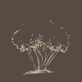 drzewo stylizowany ręka patroszona Beżowa drzewna nakreślenie sylwetka odizolowywająca Obrazy Stock