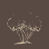 drzewo stylizowany ręka patroszona Beżowa drzewna nakreślenie sylwetka odizolowywająca na ciemnego brązu tle Zdjęcie Royalty Free
