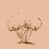 drzewo stylizowany ręka patroszona Brown nakreślenia drzewna sylwetka odizolowywająca Fotografia Stock