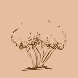drzewo stylizowany ręka patroszona Brown nakreślenia drzewna sylwetka odizolowywająca na beżowym tle Zdjęcie Royalty Free