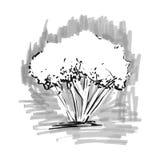 drzewo stylizowany ręka patroszona Drzewna nakreślenie sylwetka na świetle - szary tło Obrazy Stock
