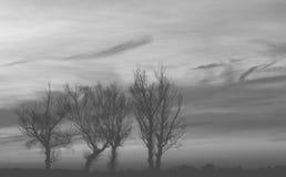 Drzewo sylwetka - czarny i biały Obrazy Stock