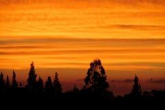 Drzewo sylwetka przy zmierzchu światłem Fotografia Royalty Free