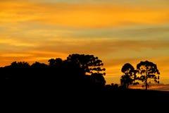 Drzewo sylwetka przy zmierzchu światłem Obrazy Royalty Free