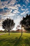 Drzewo sylwetka w Regent's Park w Londyn przy zmierzchem fotografia royalty free
