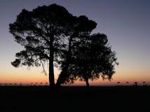 drzewo sylwetki Obraz Royalty Free