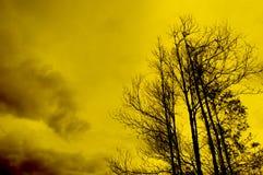 drzewo sylwetki Fotografia Stock