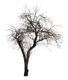 drzewo sylwetki Obrazy Stock