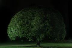 drzewo sylwetki zdjęcia royalty free
