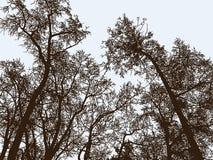 Drzewo sylwetki w zima parku Obrazy Stock