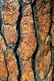 drzewo szczekać Obraz Royalty Free
