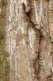 drzewo szczekać Obrazy Stock