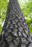 drzewo szczekać Zdjęcie Stock