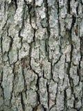 drzewo szczekać Fotografia Royalty Free