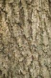 drzewo szczekać Fotografia Stock