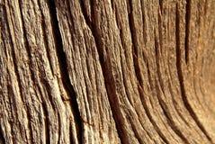 drzewo szczekać weathersa Obrazy Stock