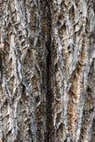 drzewo tekstury szczekać Zdjęcia Royalty Free