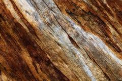 drzewo tekstury szczekać Obraz Royalty Free
