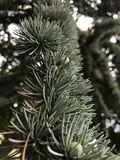 drzewo textured zdjęcie stock