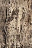 drzewo textured Zdjęcia Royalty Free