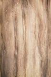 Drzewo textured tło Obraz Royalty Free