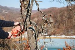 drzewo tnący pracownik Obrazy Royalty Free
