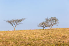 Drzewo trawy pola krajobraz Zdjęcia Royalty Free