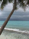 drzewo tropikalne palm burzy Fotografia Stock