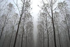 drzewo tunel Zdjęcia Royalty Free