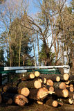 Drzewo usługa ciężarówka zdjęcie royalty free