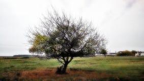 Drzewo w łące Obraz Stock