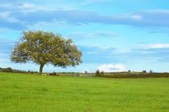 Drzewo w łące Fotografia Royalty Free