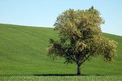 Drzewo w łące Obrazy Royalty Free