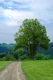 Drzewo w łące Zdjęcia Stock