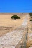 Drzewo w łąkach Obraz Stock