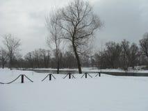 Drzewo w łańcuchach Fotografia Stock
