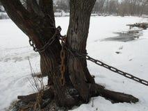 Drzewo w łańcuchach Zdjęcie Royalty Free