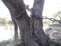 Drzewo w łańcuchach Obrazy Royalty Free