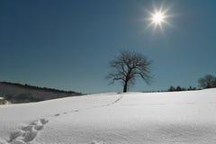 Drzewo w śniegu rozjaśnia księżyc w pełni przy nocą. fotografia royalty free